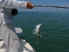 Angler and Jumping Tarpon ©Ross Reeder 2011